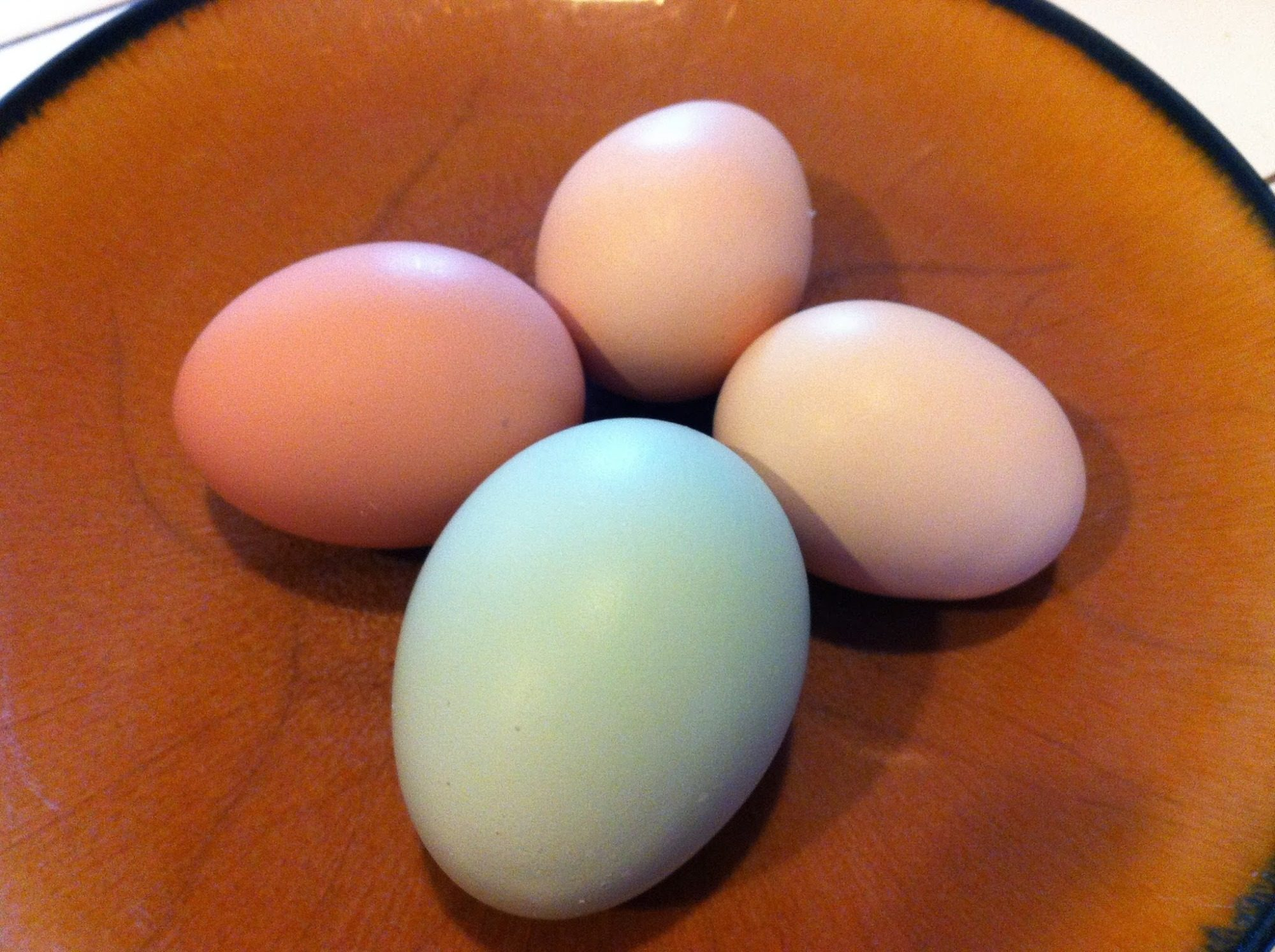Eggs from my first 4 chickens.