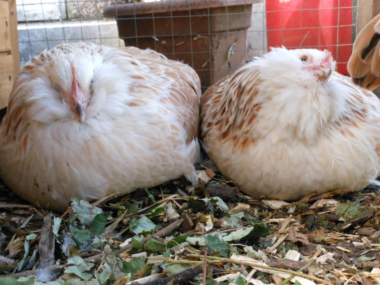 chicks 13.jpg