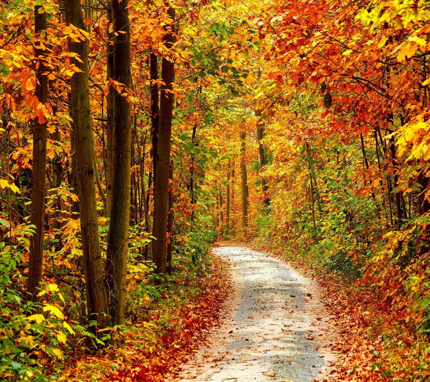 Autumn_Road-wallpaper-10380415.jpg