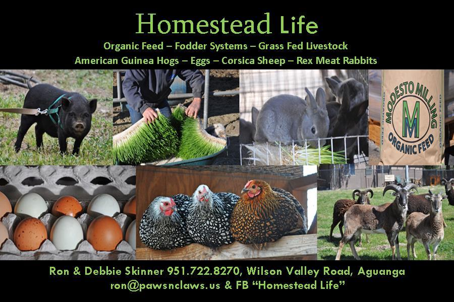 Homestead Life business card.jpg