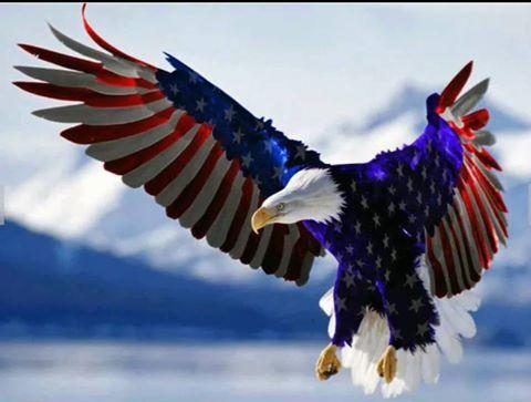 USA eagle.jpg