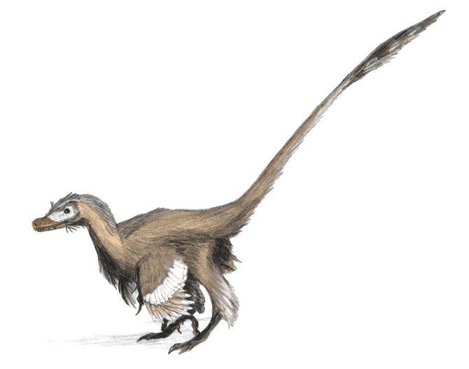 Velociraptor_dinoguy2.jpg