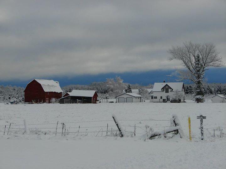 My Farm.jpg