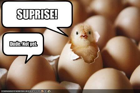 funny-pictures-surprise-chicken-is-.jpg