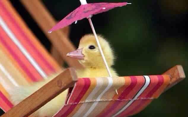 duck (61).jpg