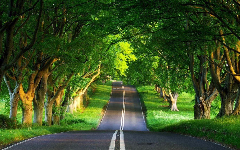 pretty nature road.jpg