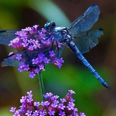 a-beautiful-Dragonfly.jpg