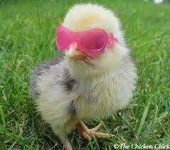 chick with shades.jpg
