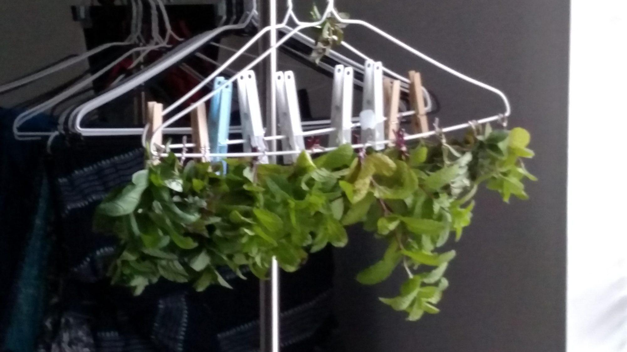 Fresh herbs prepared for drying!