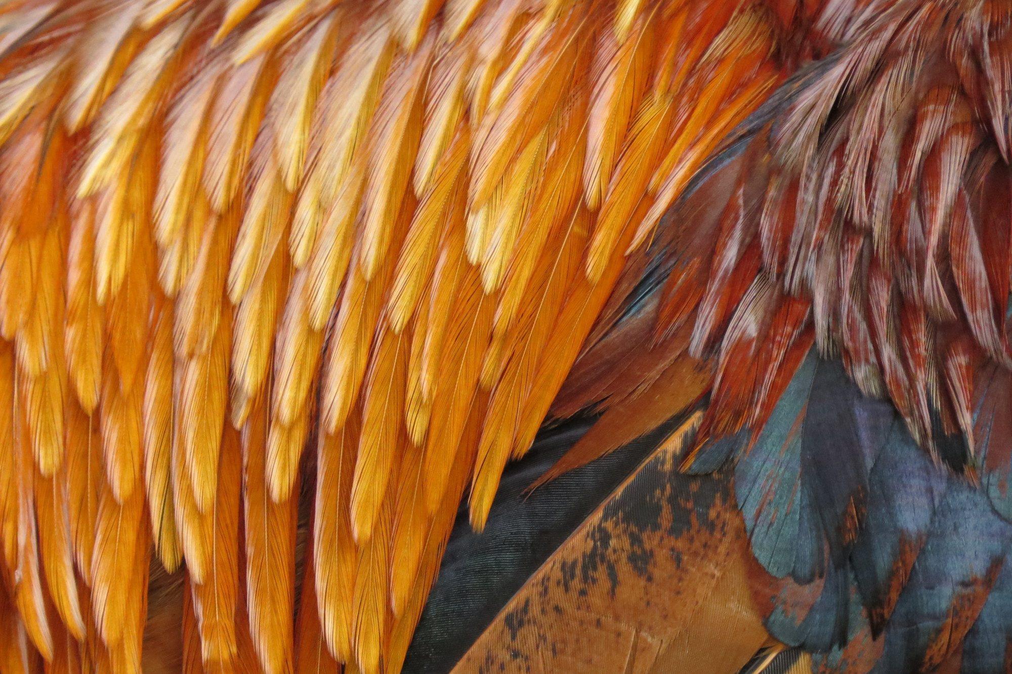 TheKindaFarmGal's photos in Saddle Feathers