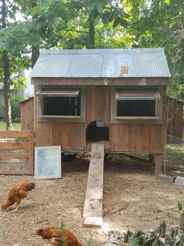 our chicken resort