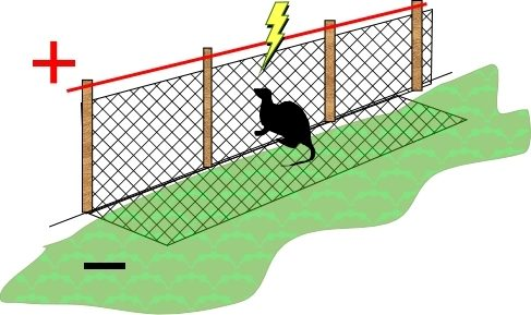 A Treatise on Electric Fences for Poultry