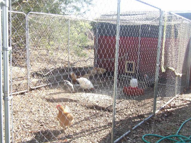 Ventilation For Chicken Houses : Chicken coop ventilation