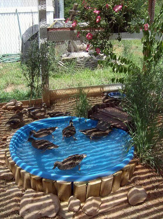 Pictures Of Backyard Duck Ponds : Duck PondPool suggestions