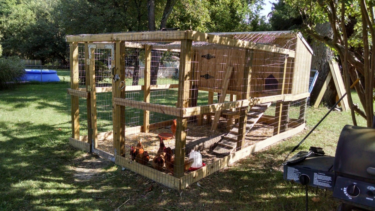 Backyard Chickens At Night : Chickens stopped putting themselves to bed, awake at night