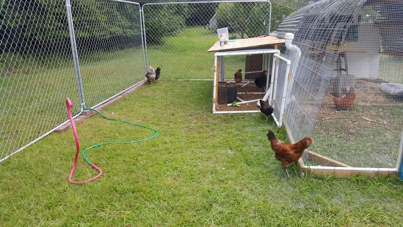 Outdoor Brooding Setup Ideas