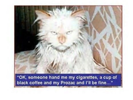 coffee cat.jpg