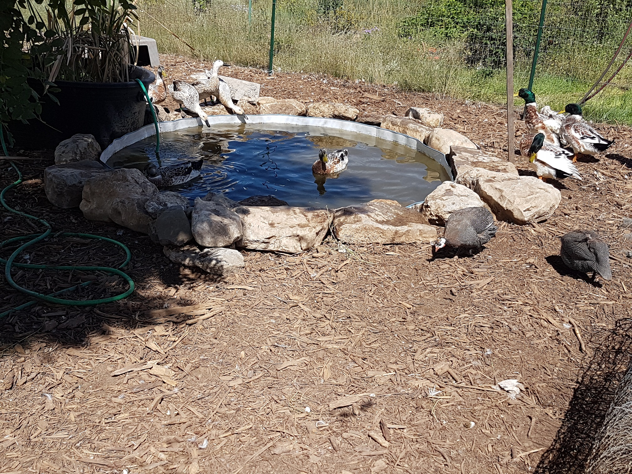 Follow Up To Keeping Duck Pond Water Clean With