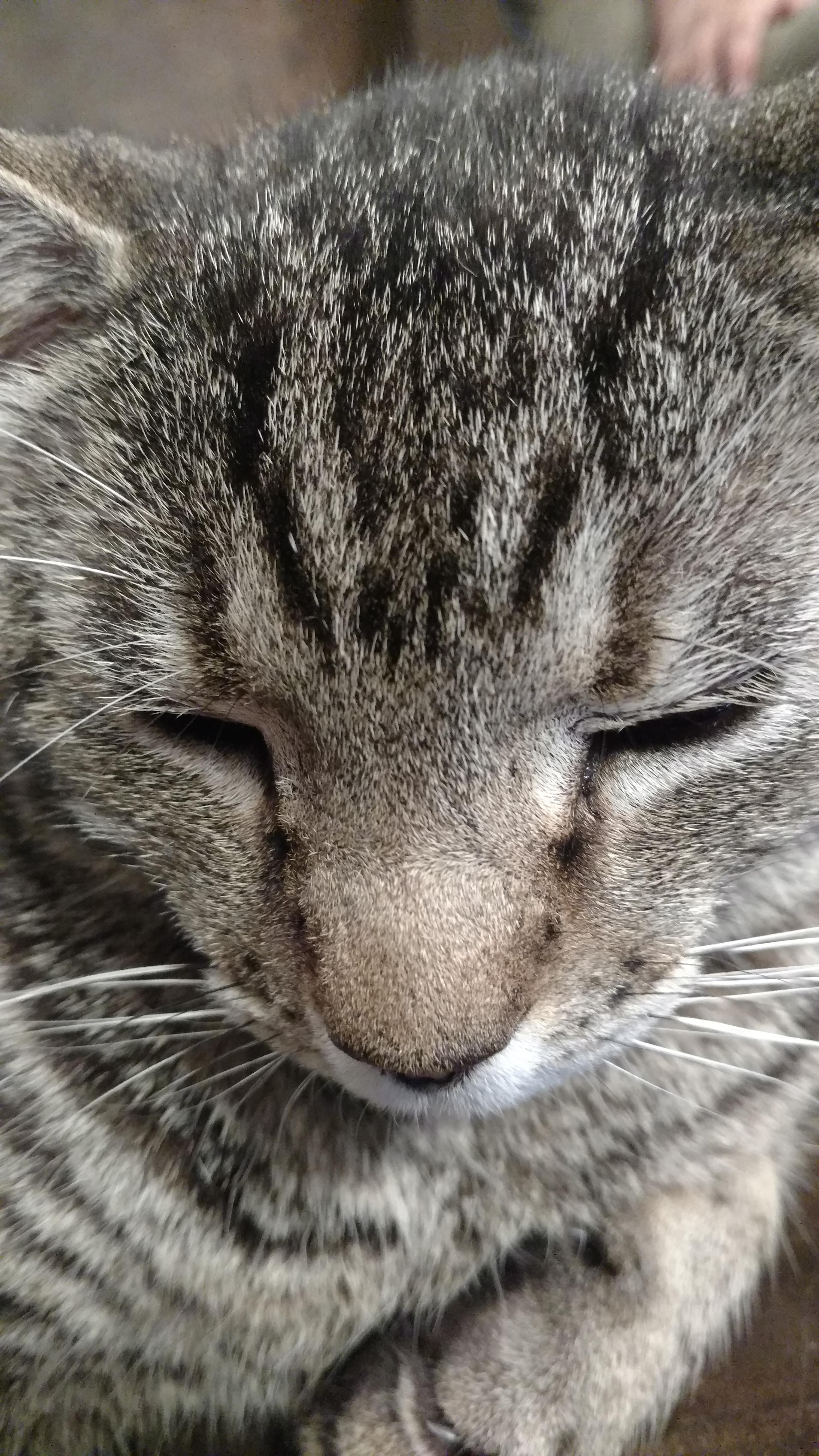 Kitty 5-1-16.jpg