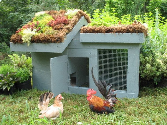 37 Chicken Coop Designs and Ideas: Living Roof Coop | Raising Chickens In Your Homestead | The Ultimate Guide