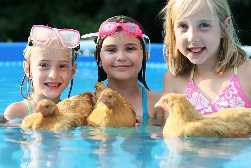 Keltara review 1165 of their orpington chicken o for Swimming chicken