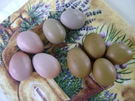how to get chickens to lay bigger eggs