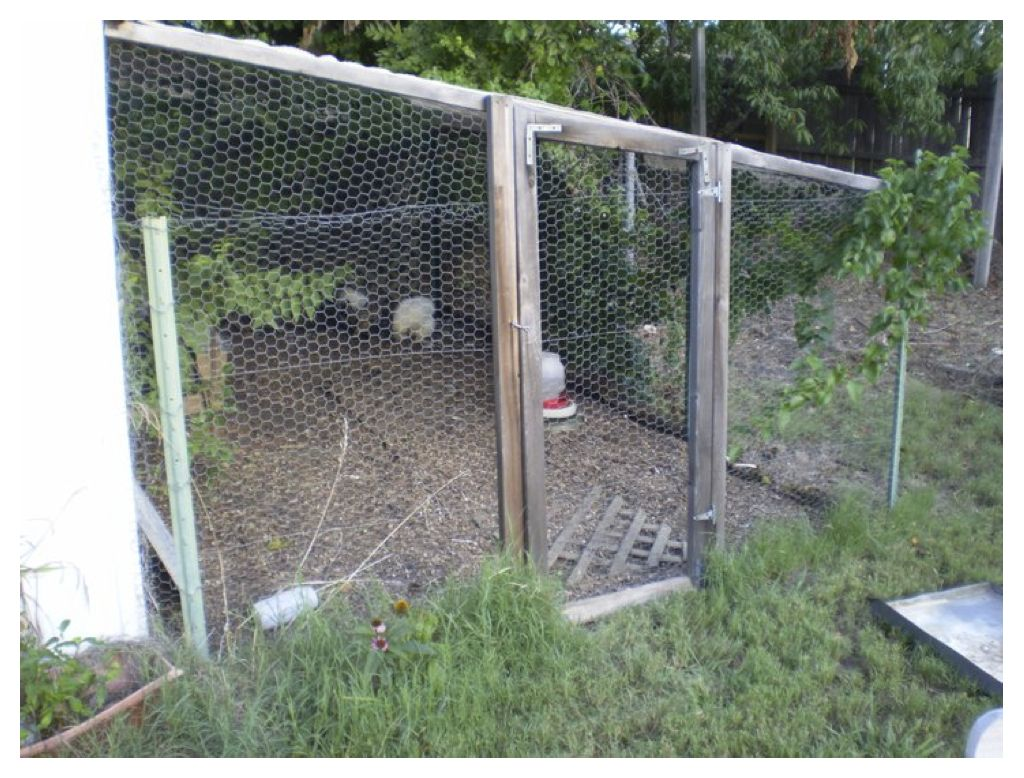 Raising Chickens on a Shoestring | BackYard Chickens