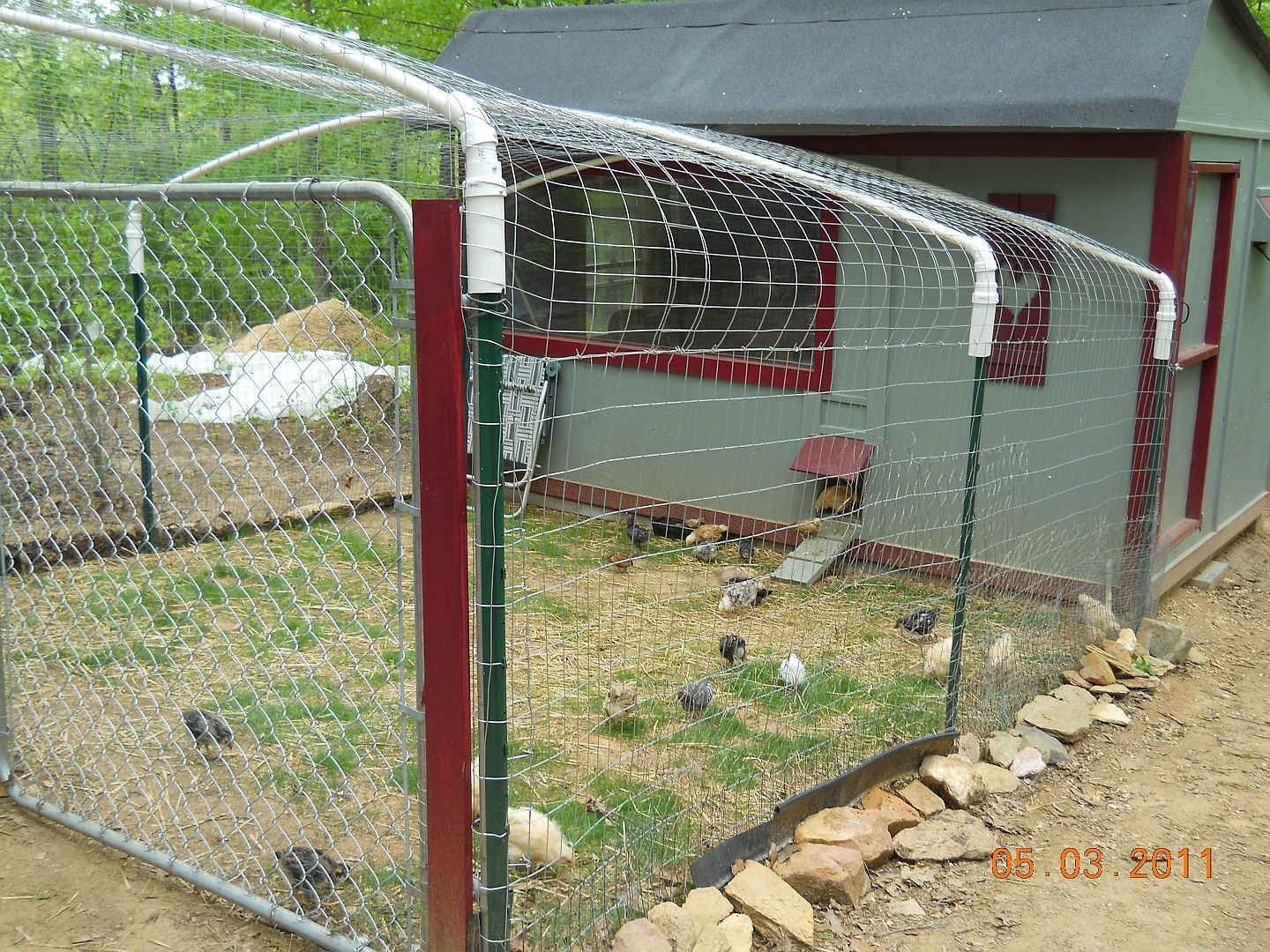 How secure is your run backyard chickens for Enclosed chicken run plans