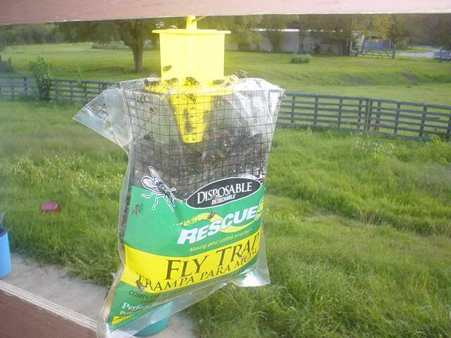 house flies how to get rid of them