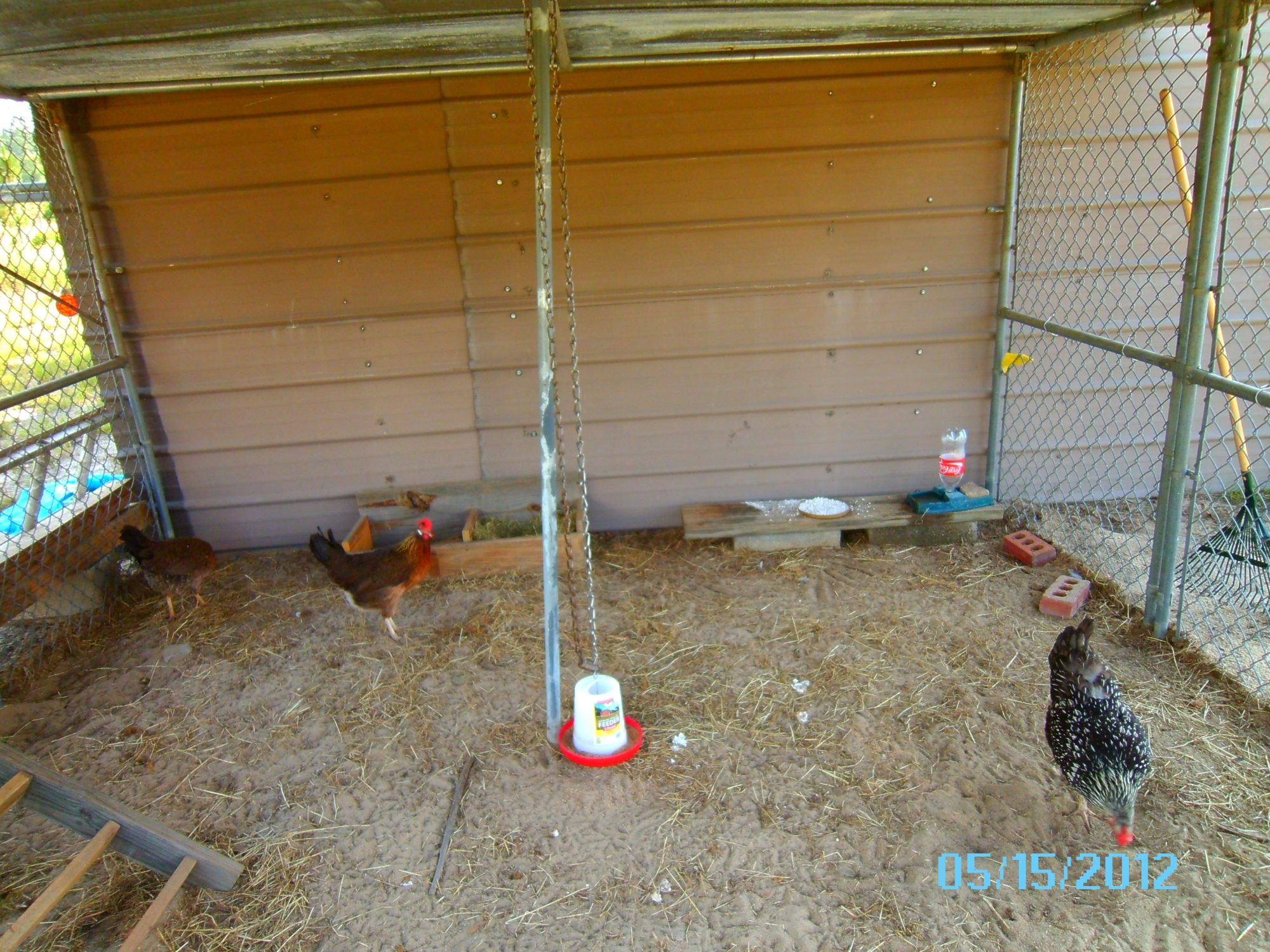 our diy chicken coop backyard chickens
