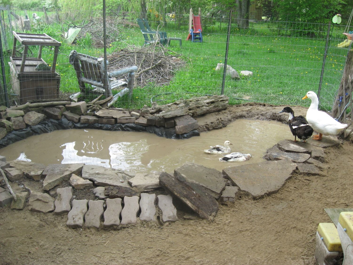 Expanded the ducks pond backyard chickens for Design duck pond