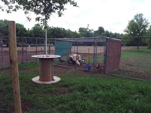 Peafowl Aviary BackYard Chickens