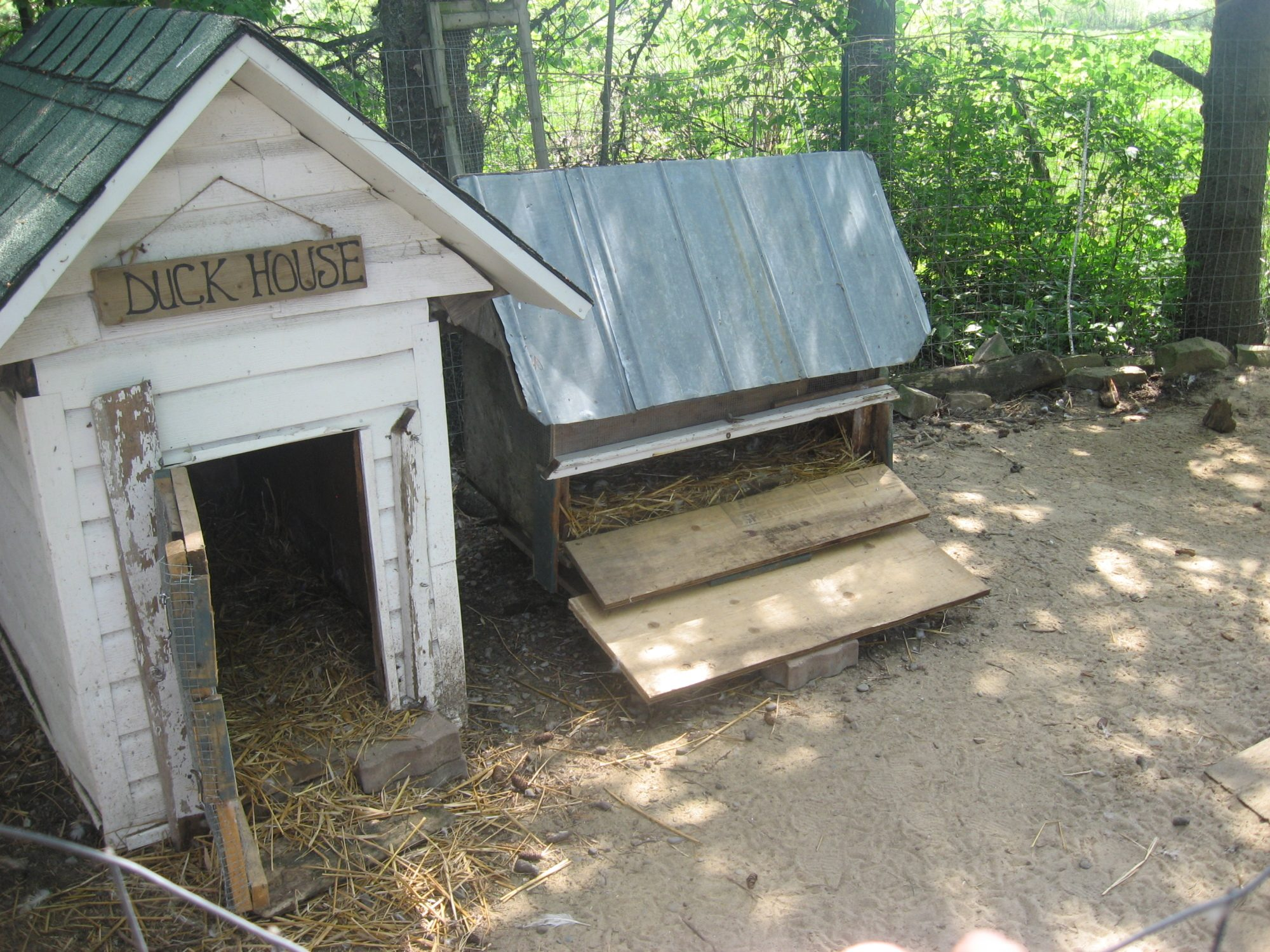 Duck house page 3 backyard chickens for Building a duck house shelter
