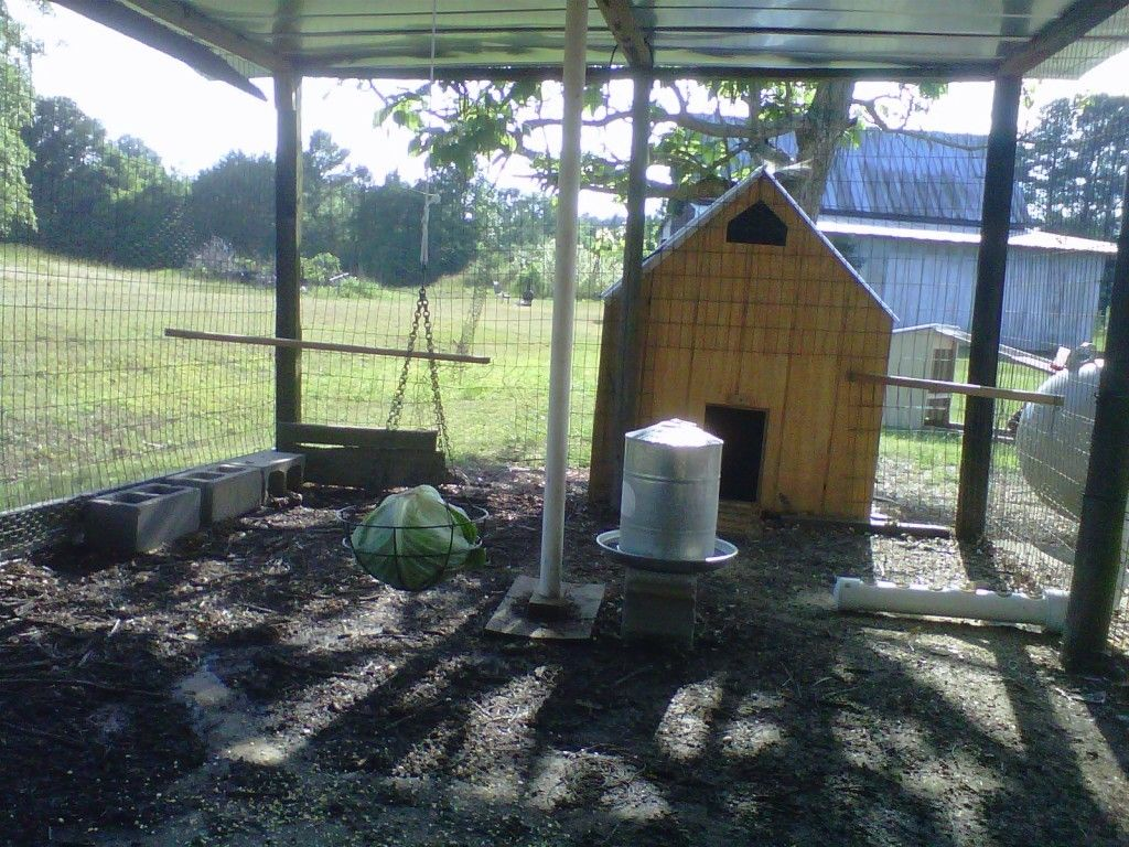 chicken treats for boredom or protein defiency backyard chickens