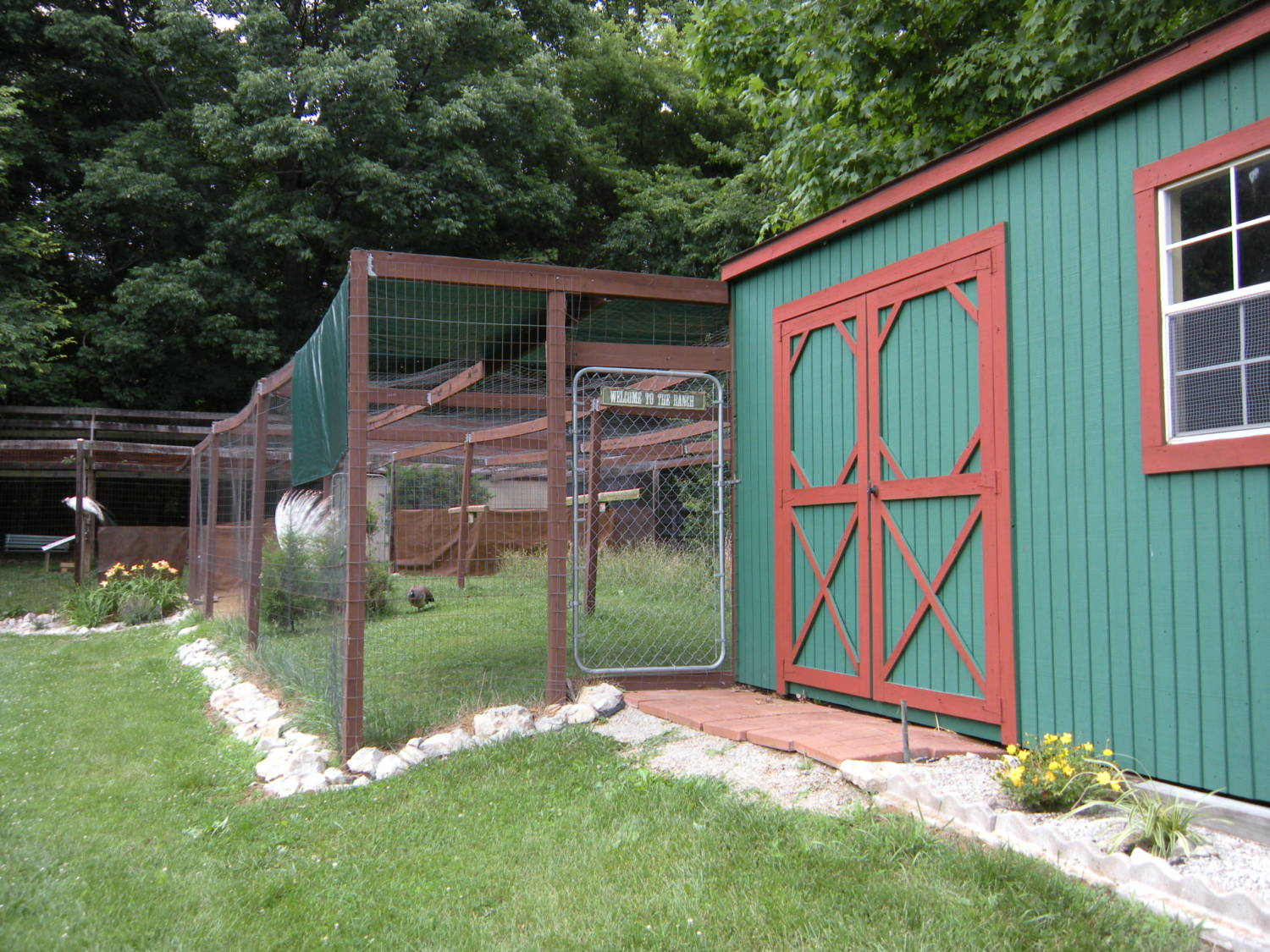 peafowl 102 advanced housing and accessories backyard chickens