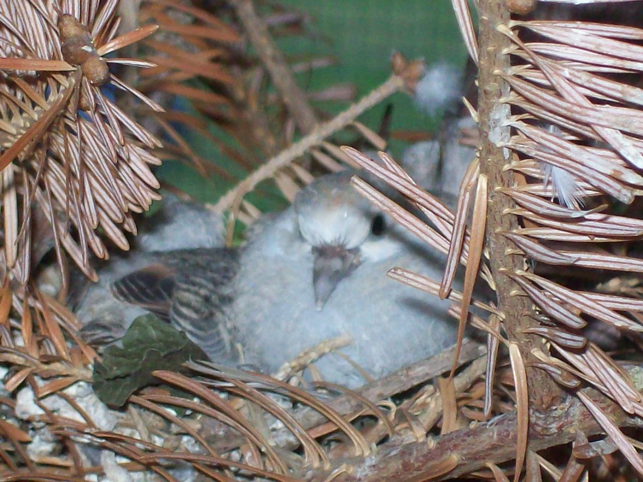 Outdoor Aviary Birds Backyard Chickens