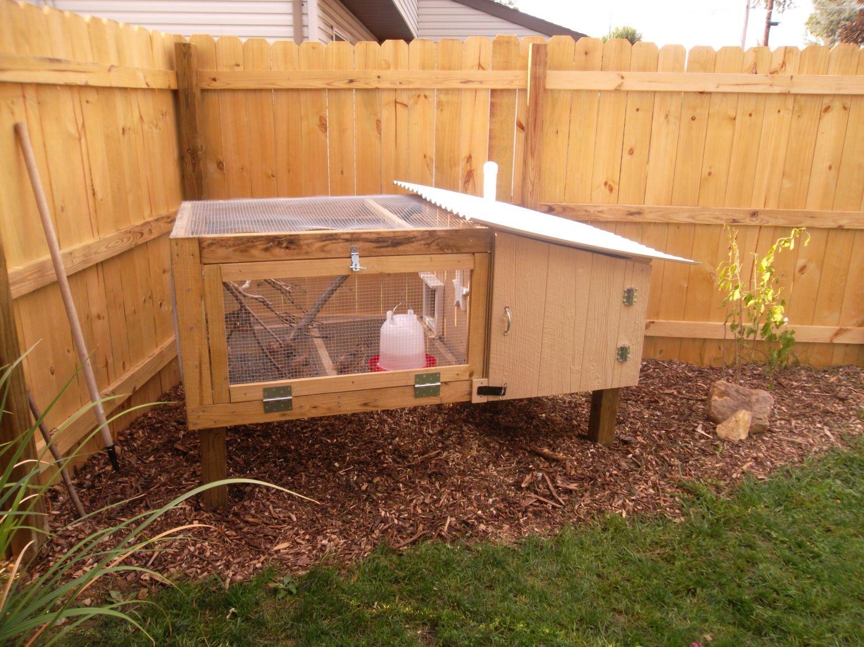 My Backyard Coturnix Coop And Urban Farm