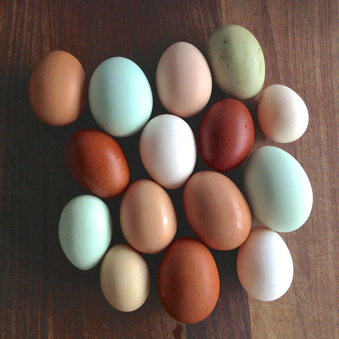 Eier, Hexen und Bilby: 15 Besonderheiten rund um Ostern ...