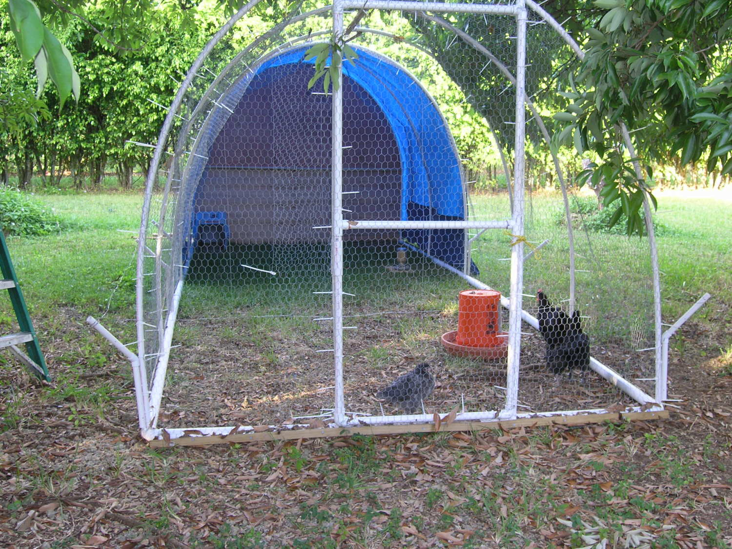 My pvc chicken coop project for Pvc chicken house