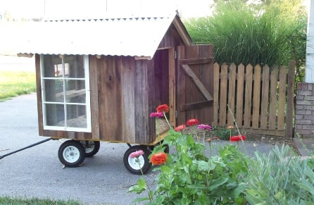 The Nags Head Chicken Coop Tractor Backyard Chickens
