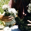 bantams_Silkies_GL_120.jpg