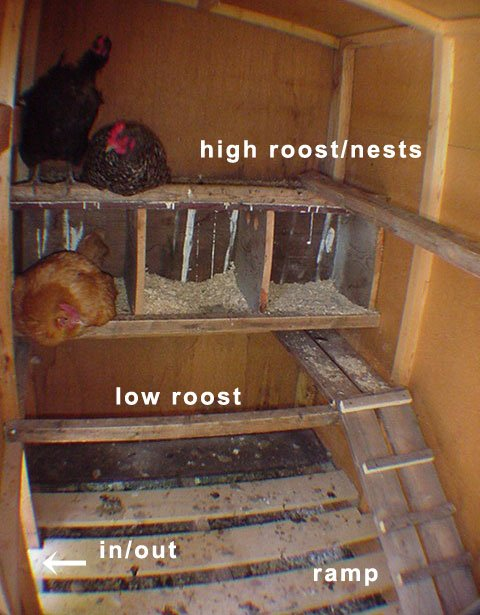 Chik tim useful chicken coop plans with green roof for Chicken coop interior designs