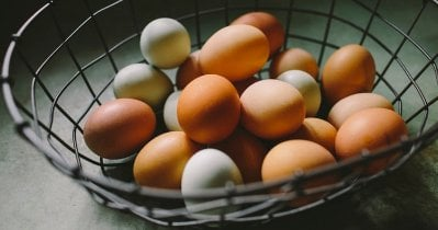 Egg Color Chart: What Egg Color Does Your Breed Lay