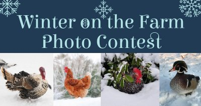 Official BYC Winter on the Farm Photo Contest