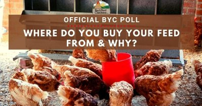 Where Do You Buy Your Feed From & Why?