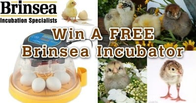 Cutest Baby Fowl Photo Contest