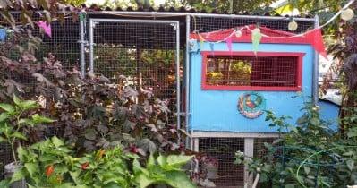 "Coop Focus: ""Villa Gallina"" A Tiny Chicken Coop"