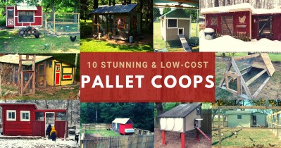 10 Stunning Low-Cost Pallet Coops