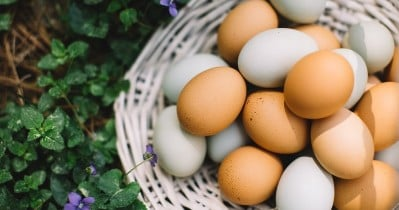 Tips On Selling Eggs By The Road
