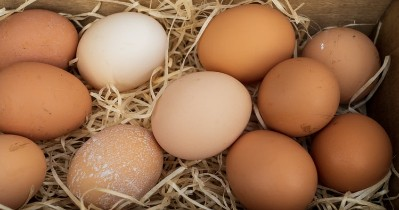 Interesting Facts About Chicken Eggs